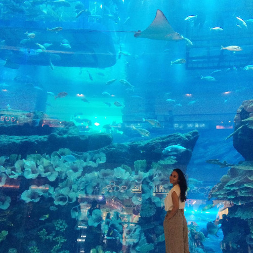 A giant aquarium inside a mall, why not?