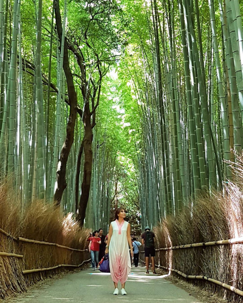 Beautiful bamboo grove!