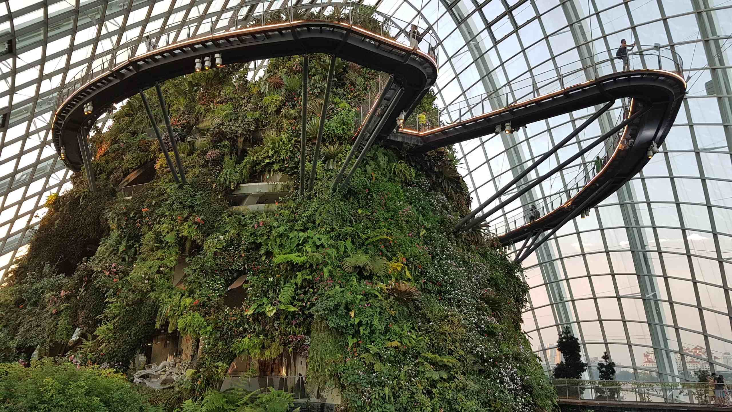 Cloud Forest. Amazing, ya?